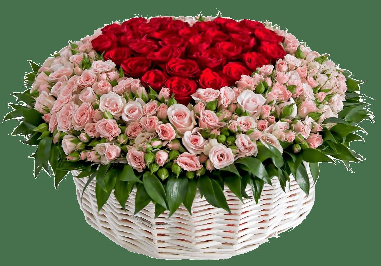 выглядеть картинки розы для милой сперва